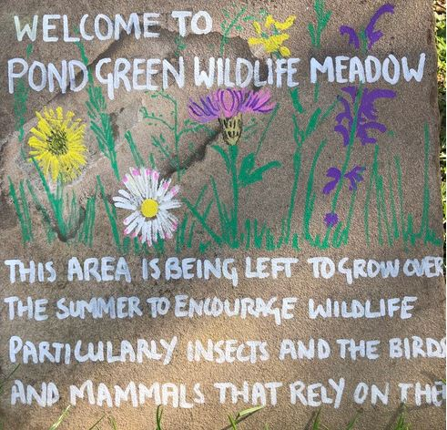 Pond Green Wildlife Meadow